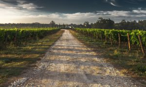 Grand vin de Bordeaux, pain et fromage