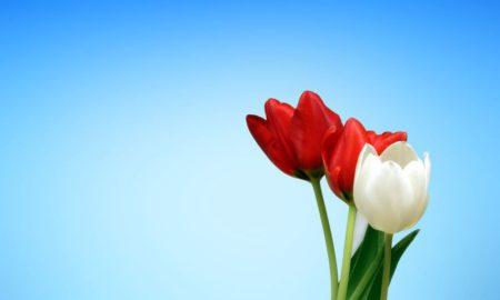 Funérailles: quelles fleurs, quelles couleurs?