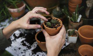 Avoir la main verte : les 4 applications pour vous aider