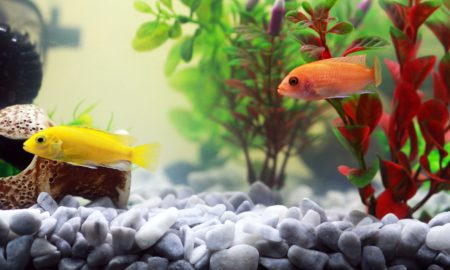 Comment bien choisir son chauffage d'aquarium?