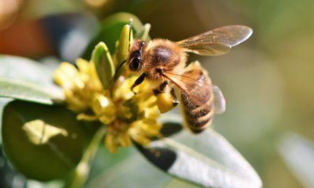 Pourquoi attirer les insectes pollinisateurs au jardin ?