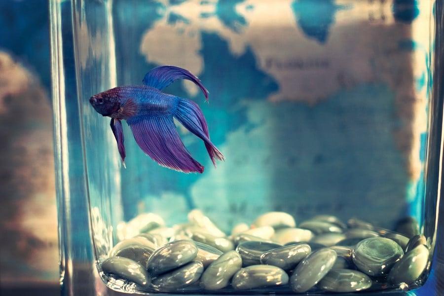Le rôle des pompes à eau et air dans l'aquarium
