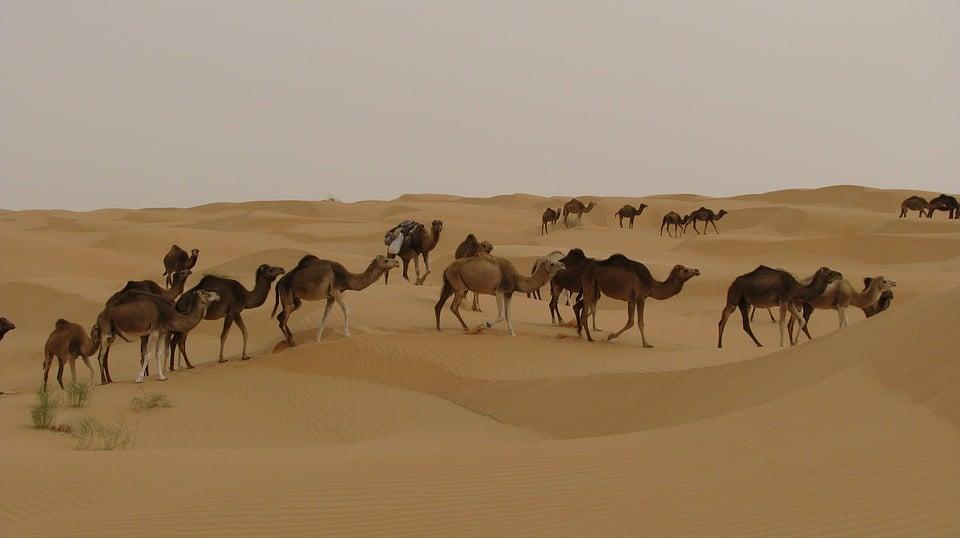 Conseils pour passer un agréable séjour à Djerba